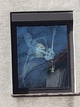 Une fenêtre à Wien Rodaun - 03.20 - Photo JYR